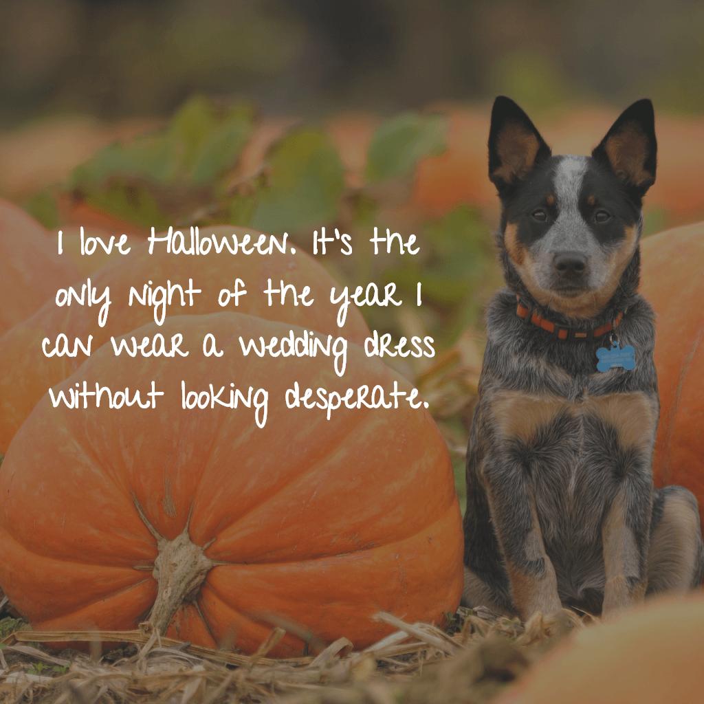 Halloween Quotes 2